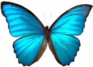 Butterfly symbol of Transformation