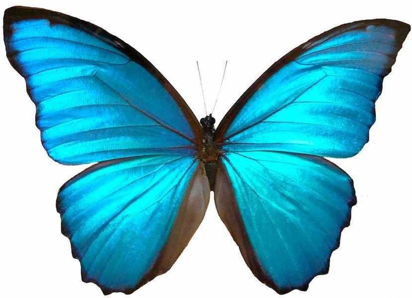 Butterfly-Testimonial
